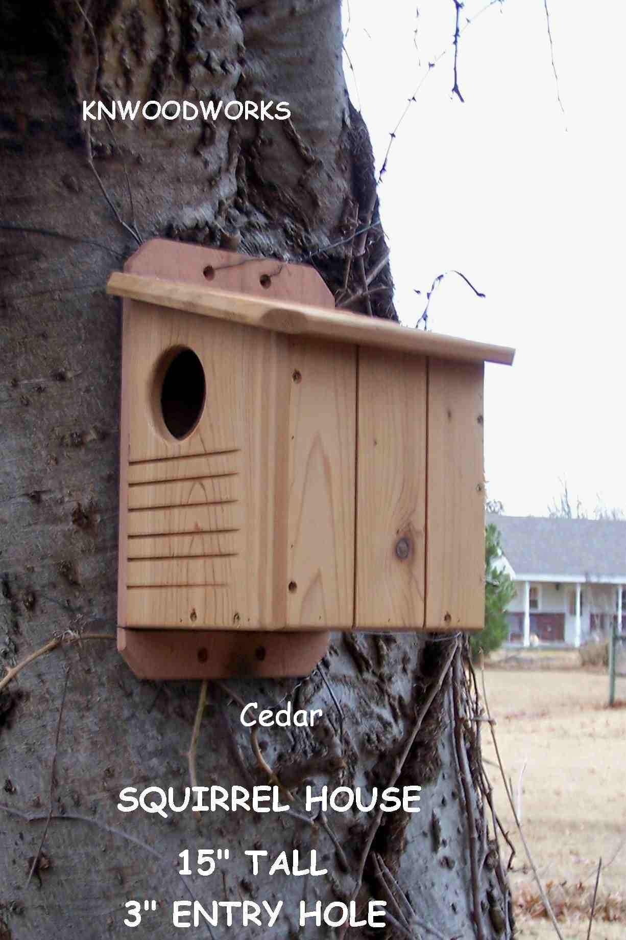 squirrel house pitchure